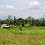 Campagne à proximité de Klung Kung Bali